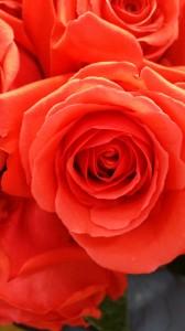 Heavenly Cake Pops Tall Wedding Cake Roses 1